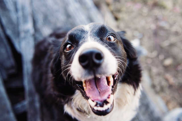 what is the best affordable dog food