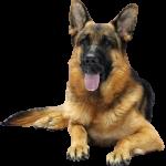 best affordable dog food for german shepherds