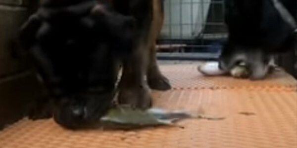 Cooking Guide Fish For Dogs