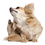 what is a good hypoallergenic dog food for allergies and Itching